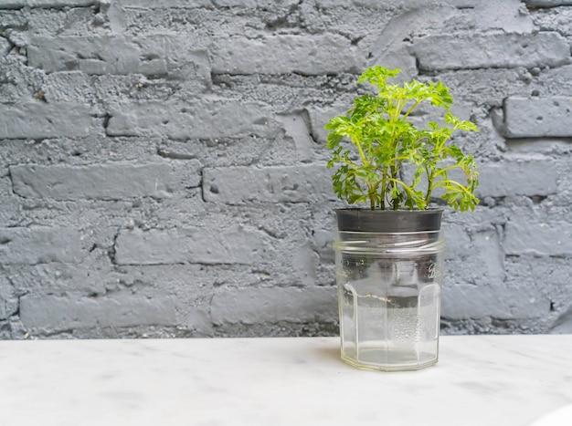 Decoração de planta de vaso com sala vazia