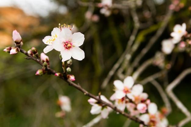 Decoração de uma linda árvore com flores