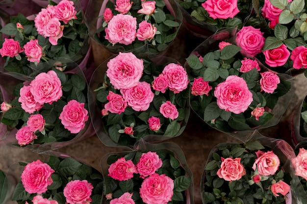 Decoração de vista superior com peônias rosa