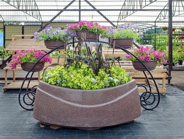 Decoração do centro do jardim com lindas flores de petúnia em grandes vasos de flores