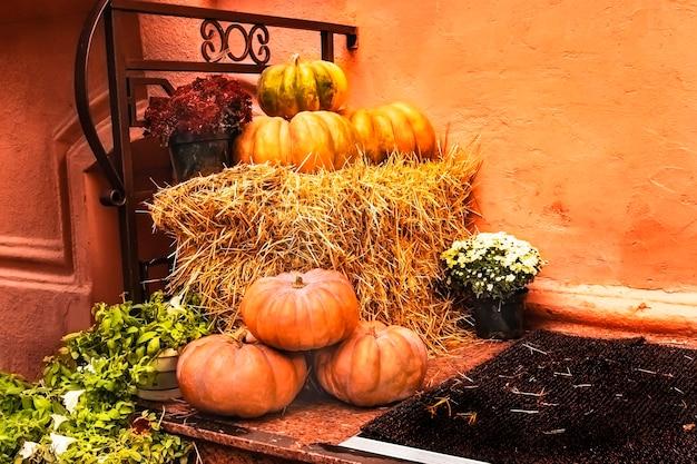 Decoração festiva com abóboras e flores para o halloween do dia de todos os santos