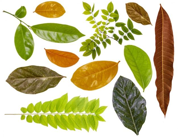 Decoração macro da folha da cor da folha.
