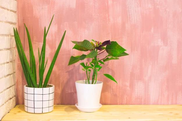 Decoração minimalista com plantas em vasos brancos.