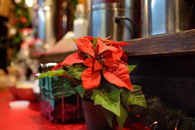 Decoração na feira de natal de tallinn. vaso de flores com poinsétia.