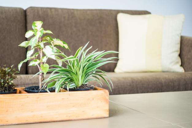 Decoração planta vaso na sala