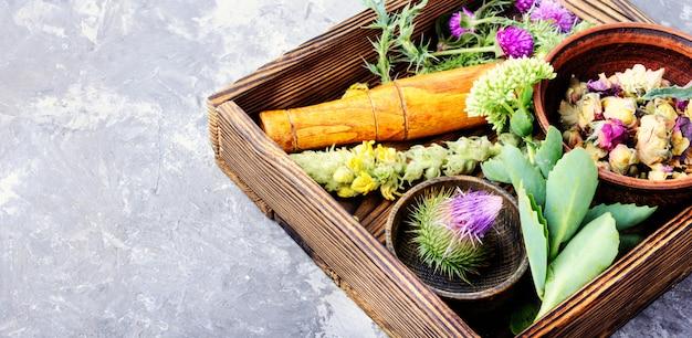 Definir ervas curativas