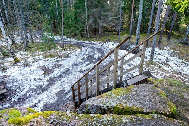 Degraus de madeira que conduzem à floresta de primavera.