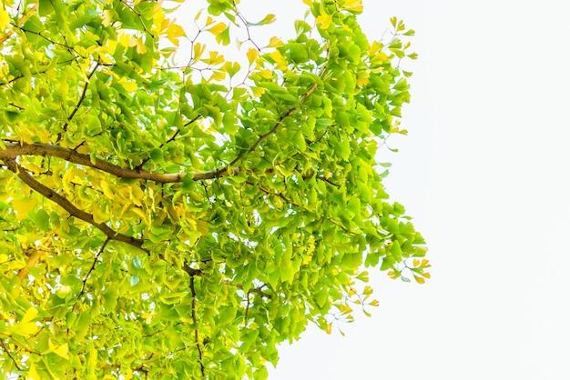 Deixa planta laranja colorida de ouro