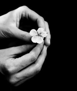 Delicadamente tratado flor