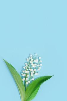 Delicadas flores da primavera desabrochando lírio branco do vale em uma superfície azul suave