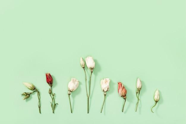 Delicadas flores secas, folhas e pétalas fecham o herbário