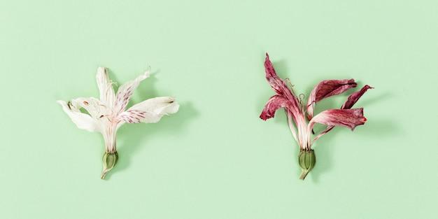 Delicadas flores secas, vermelhas e brancas, fecham o herbário.