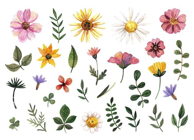 Delicado conjunto de aquarela floral prensado e arranjos de flores secas na paleta de cores naturais.
