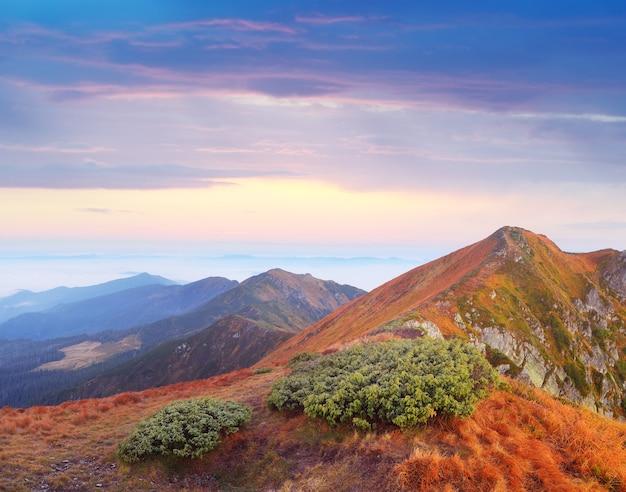 Delicado estado de natureza nas montanhas. bela paisagem ao amanhecer. montanhas dos cárpatos, ucrânia, europa