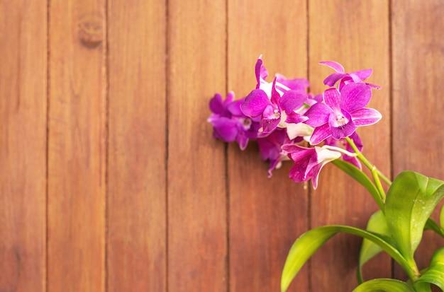 Dendrobium, orquídea roxa, orquídea no fundo desfocado de madeira, cor roxa da flor abstrata no fundo desfocado, macro