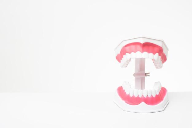 Dentes de modelo artificial no fundo branco da demonstração de atendimento odontológico