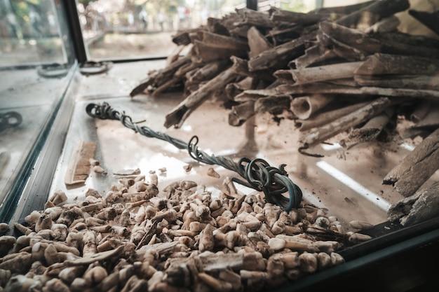 Dentes e ossos humanos nas escavações nos campos da morte, perto da cidade de phnom penh, camboja. genocídio na época de pol pot.