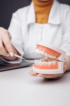 Dentista em exame oral de modelo de mandíbula
