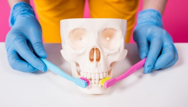 Dentista escovando os dentes de um crânio artificial com duas escovas de dente