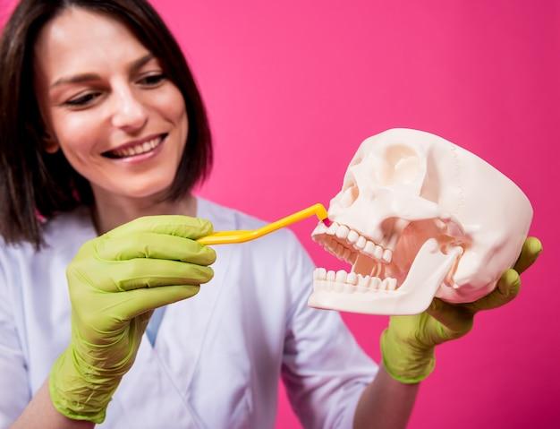 Dentista escovando os dentes de um crânio artificial com uma única escova de dentes