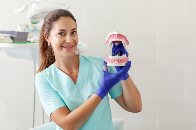 Dentista feminina, segurando uma amostra de dentes da mandíbula em um consultório odontológico