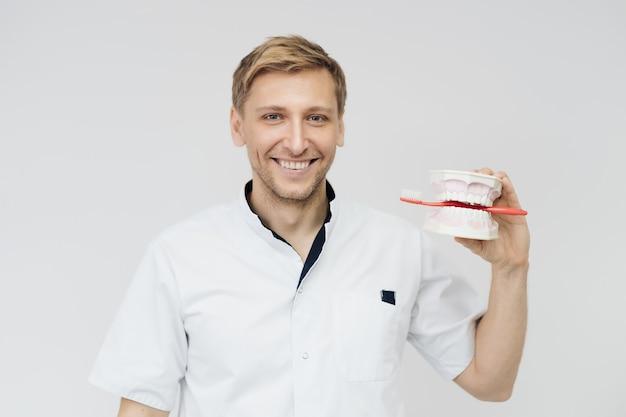 Dentista mostrando a correta higiene dental através de maquete de esqueleto dentário