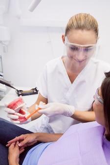 Dentista, mostrando os dentes modelo para paciente do sexo feminino