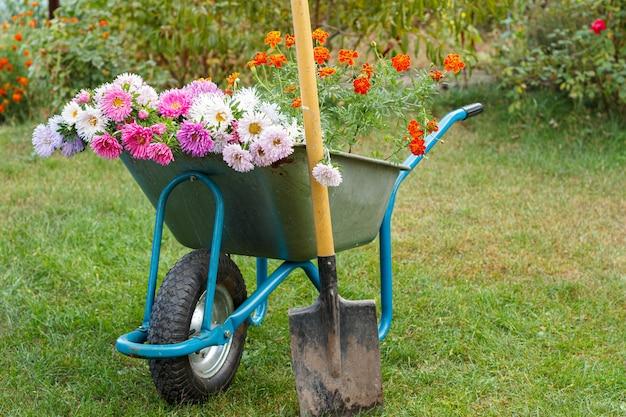 Depois do trabalho no jardim de verão. carrinho de mão com flores recortadas e uma pá na grama verde.
