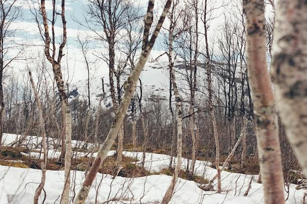Deprimente a paisagem solitária e fria do inverno