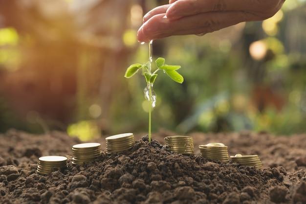 Derramando uma planta jovem de mão com moedas de pilha. plantas de jardinagem e rega.