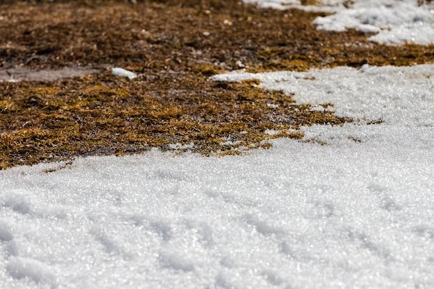 Derretendo a neve na primavera. a fronteira entre a neve e o solo descongelado com grama seca.