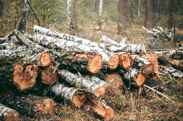 Derrubada ilegal de floresta e árvores em um parque de vida selvagem