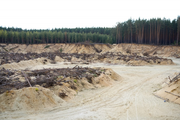 Desastre florestal desastre