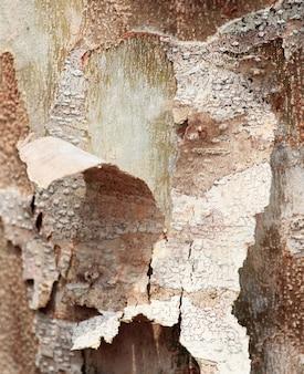 Descascando a casca na árvore, cor tonificada.