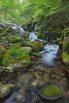 Descida do rio treito, entre vegetação abundante e rochas cheias de musgo verde