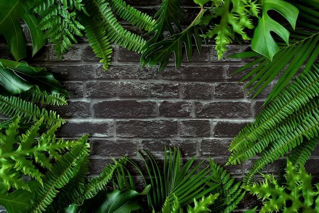 Desenhe a moldura criativa de uma natureza plana tropical. coloque monstera coco e samambaia na madeira