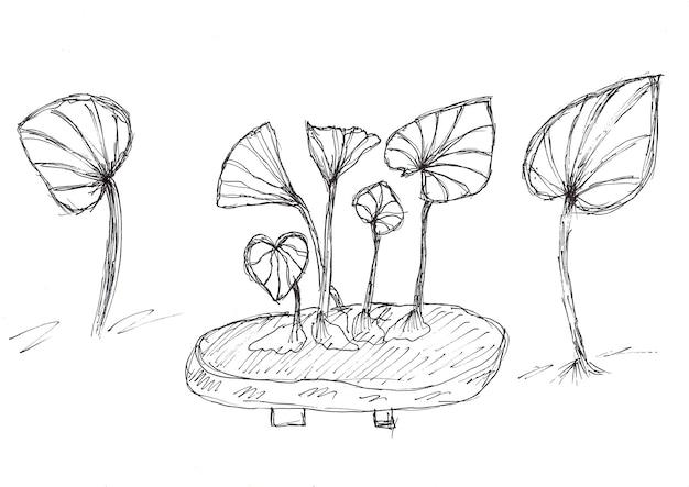 Desenho à mão da planta geranium jewel orchid com tinta preta, em papel branco
