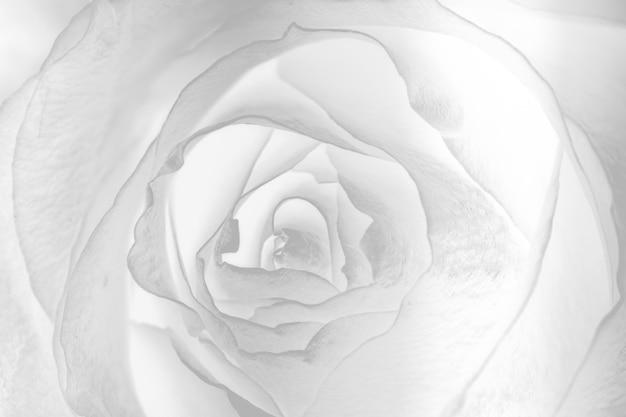 Desenho abstrato de flor de prata