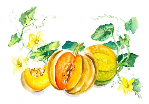 Desenho aquarela de abóbora