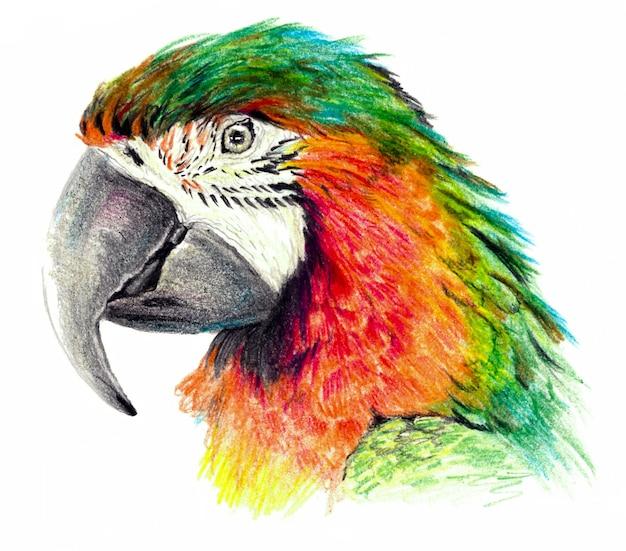 Desenho de cor - perfil de papagaio. em fundo branco. desenho a lápis detalhado
