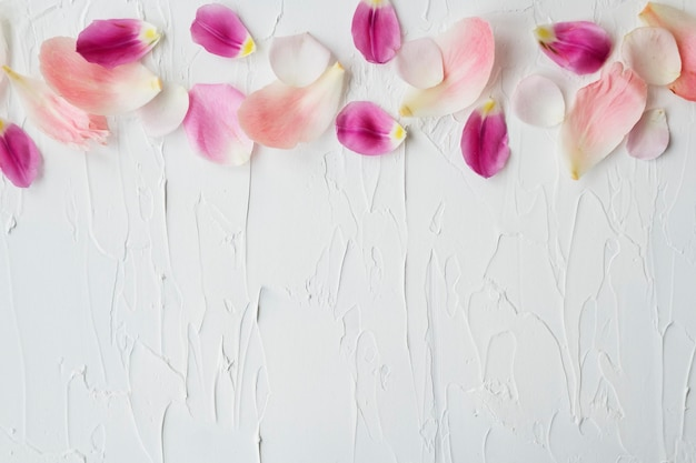 Desenho de fundo de pétalas de flores coloridas