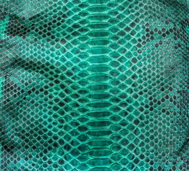 Desenho de textura de pele de cobra turquesa