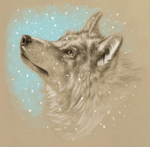 Desenho realista de uma cabeça de lobo. inverno com neve. desenho a lápis em papel colorido.