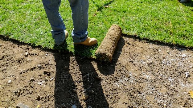 Desenrolando sod para um novo gramado