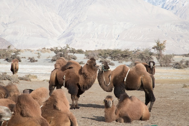Desertic paisagem na estrada de leh, no himalaia, índia