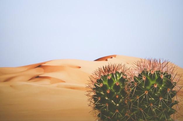 Deserto ao fundo com cactos em primeiro plano