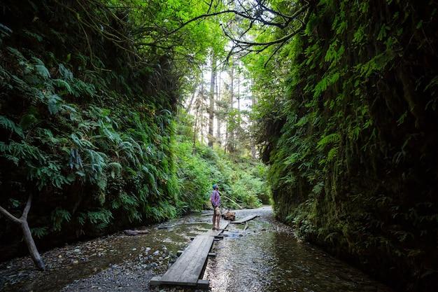 Desfiladeiro de samambaias no parque nacional de redwoods, eua, califórnia