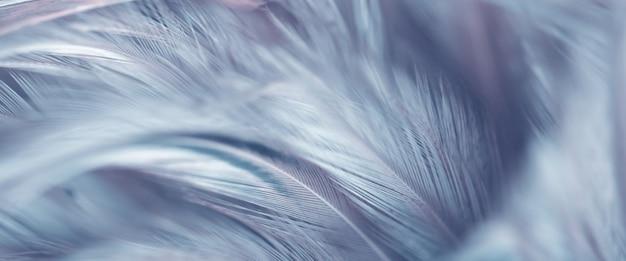 Desfocar a textura de penas de pássaro para o fundo