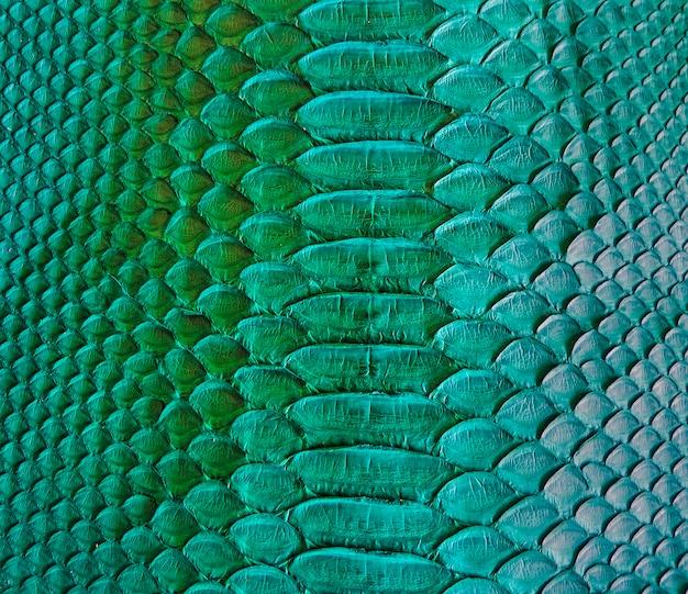 Design de textura de pele de cobra verde