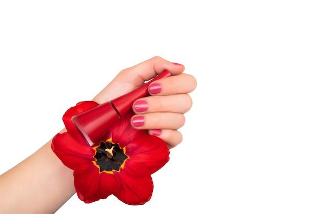 Design de unhas rosa. mão feminina com manicure rosa segurando tulipa vermelha.